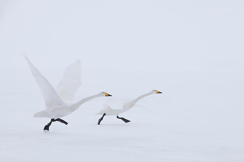 holy-crane